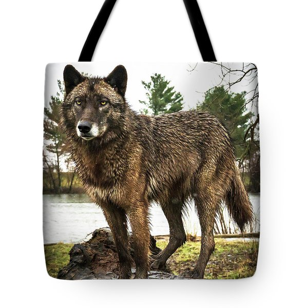 Handsome Niko Tote Bag