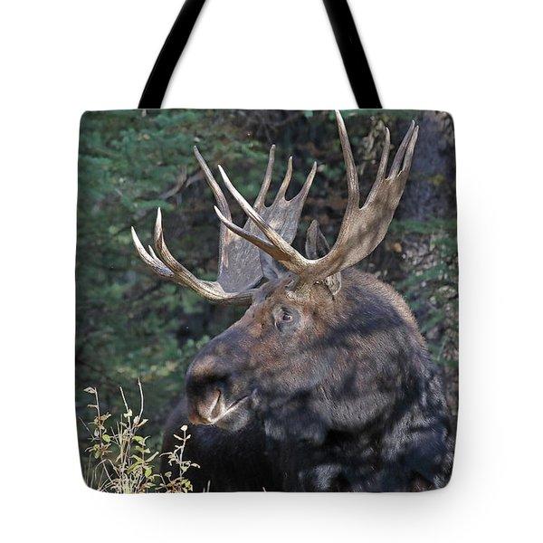 Head Study Of Bull Moose Tote Bag