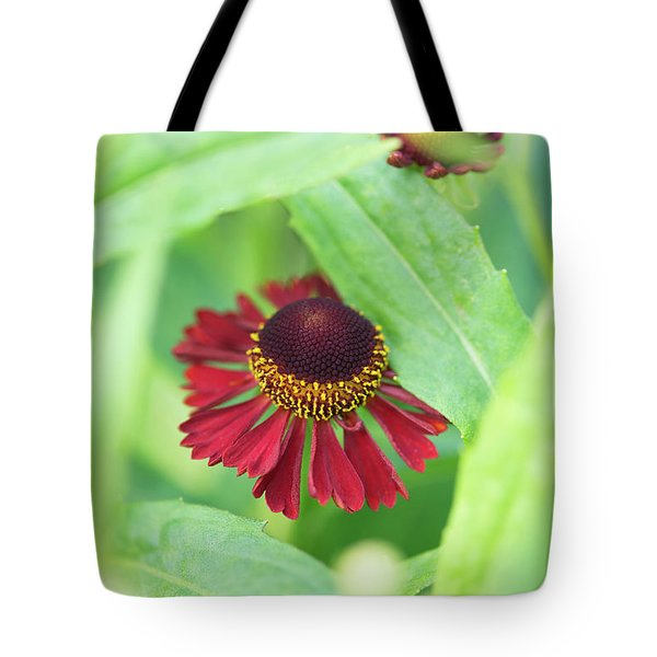 Tote Bag featuring the photograph Helenium Ruby Tuesday Flower by Tim Gainey