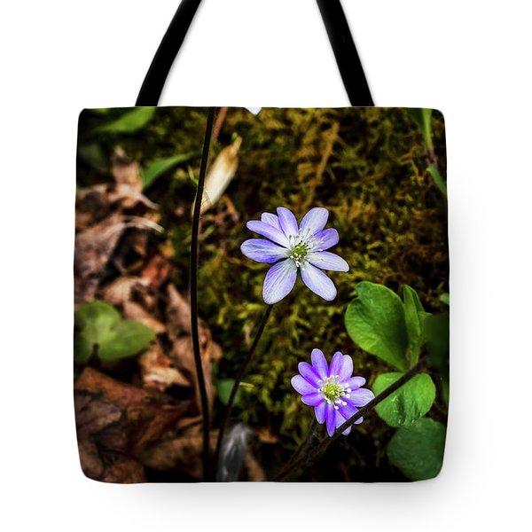 Hepatica In Bloom Tote Bag