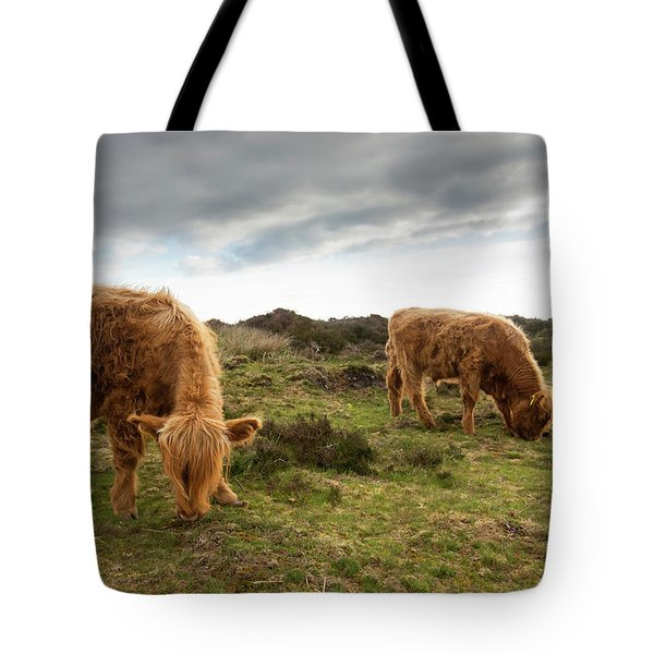 Highland Cattle Feeding At Baslow Edge Tote Bag