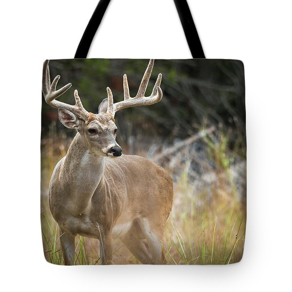 Hill Country Whitetail Tote Bag