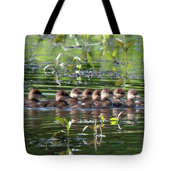 Hooded Merganser Ducklings Dwf0203 Tote Bag