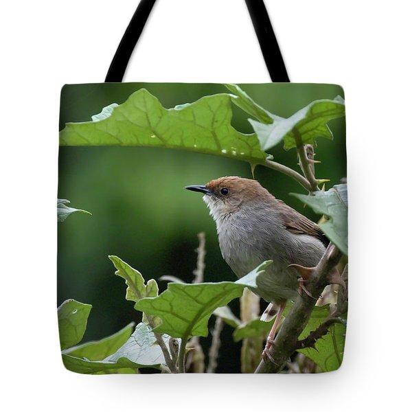 Hunter's Cisticola Tote Bag