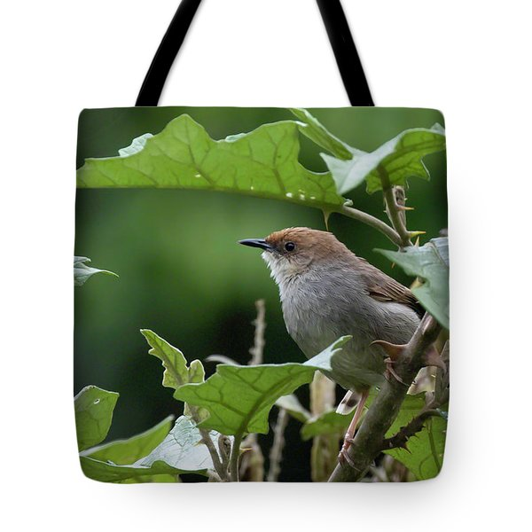 Tote Bag featuring the photograph Hunter's Cisticola by Thomas Kallmeyer