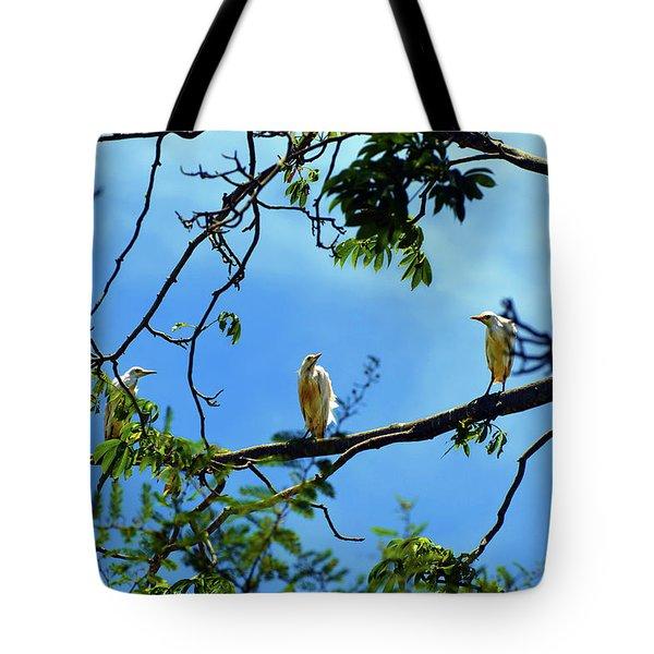 Ibis Perch Tote Bag