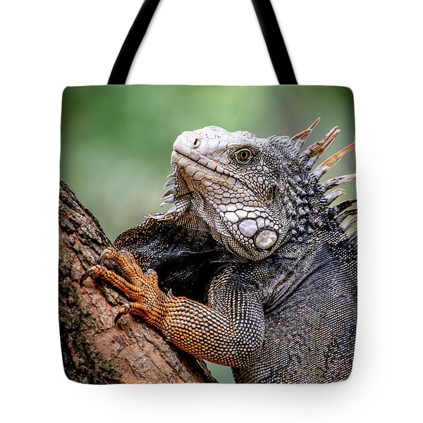 Tote Bag featuring the photograph Iguana's Portrait by Francisco Gomez