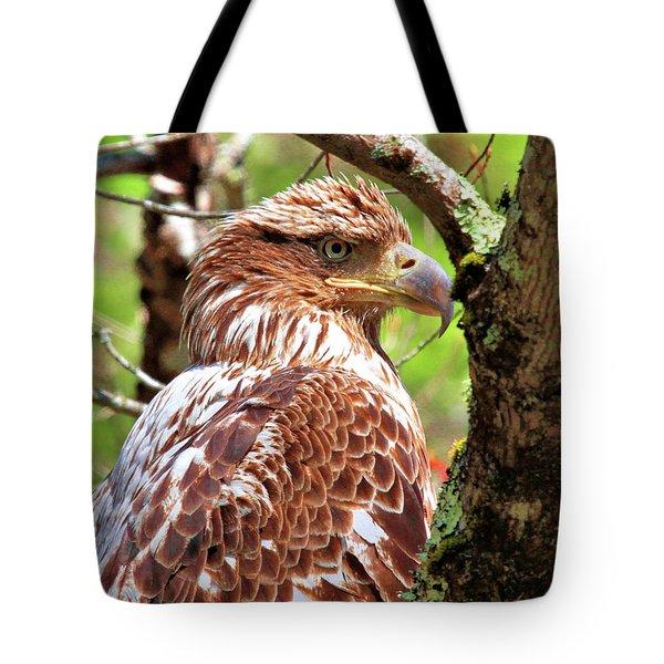 Immature Eagle Tote Bag