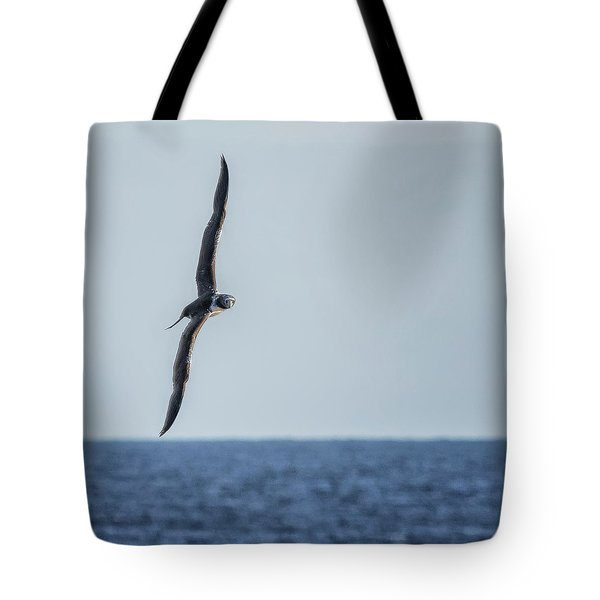 Immature Masked Booby, No. 5 Sq Tote Bag
