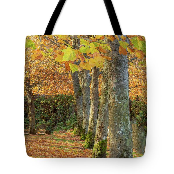 Tote Bag featuring the photograph In A Row by Bob Cournoyer