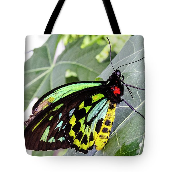 Insect Kaleidescope Tote Bag