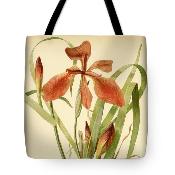 Iris Cuprea Copper Iris.  Tote Bag
