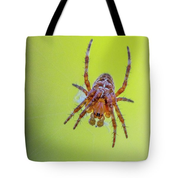 Tote Bag featuring the photograph Itsy Bitsy Spider 2 by Matthew Irvin
