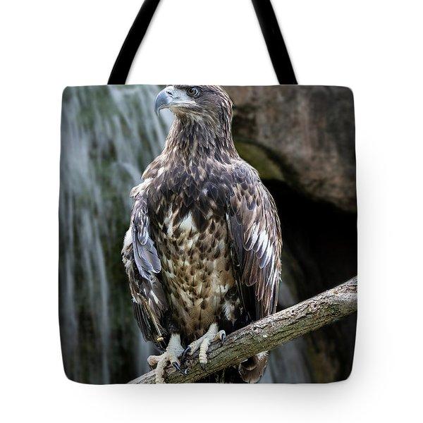 Juvenile Bald Eagle Tote Bag
