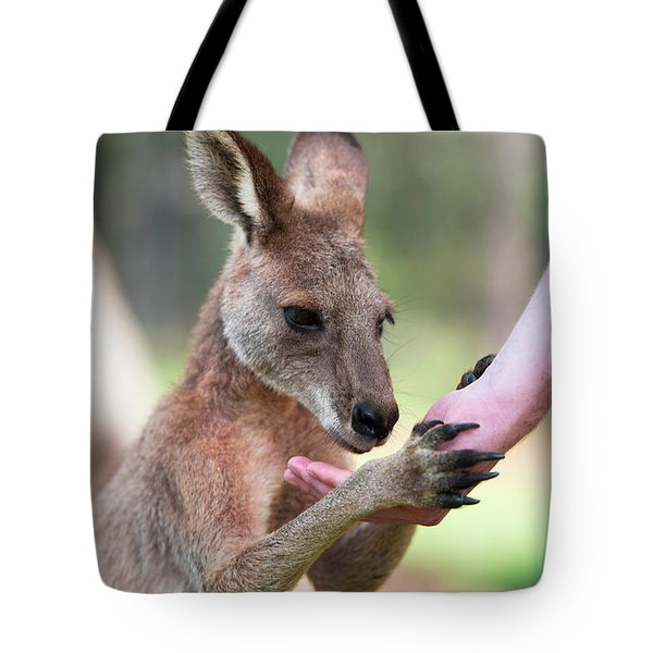 Tote Bag featuring the photograph Kangaroo by Rob D Imagery