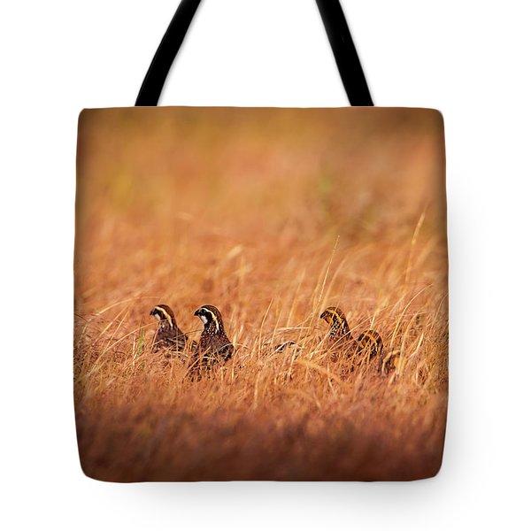 Tote Bag featuring the photograph Kansas Bobwhites by Jeff Phillippi