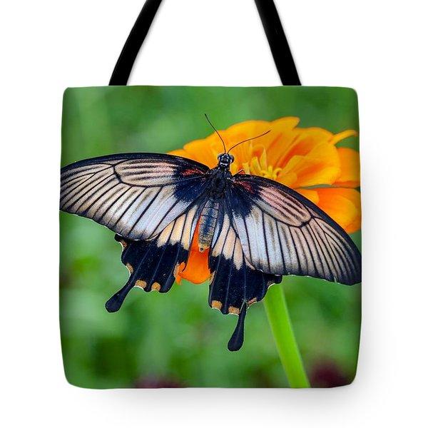 Kite Swallowtail  Tote Bag