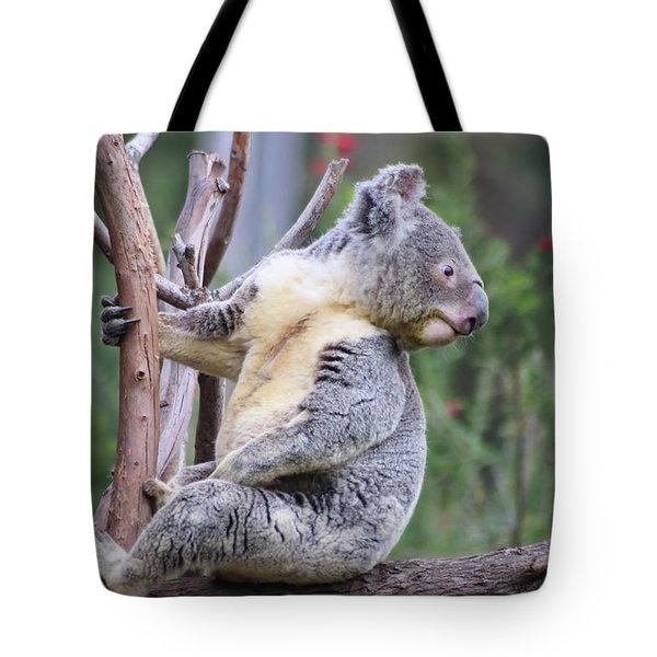 Koala In Tree Tote Bag