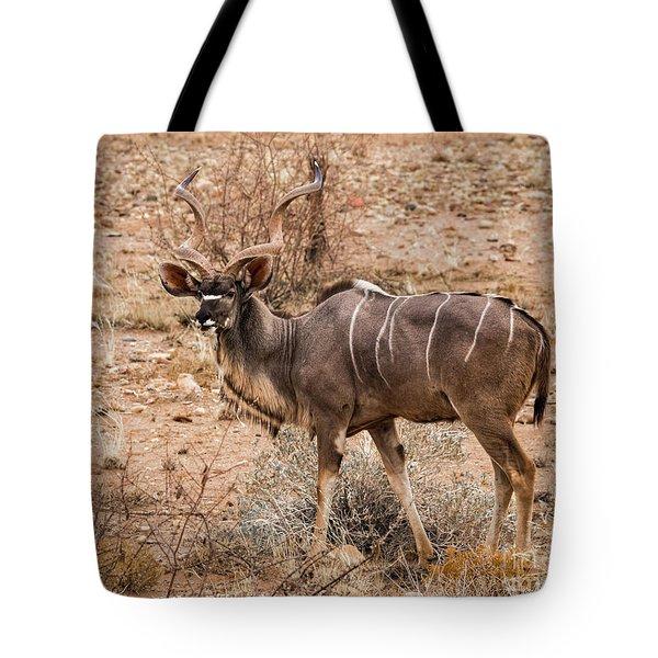 Kudu In The Kalahari Desert, Namibia Tote Bag