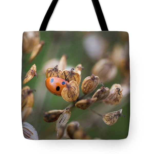 Lady Bird / Lady Bug In Flower Seed Head Tote Bag