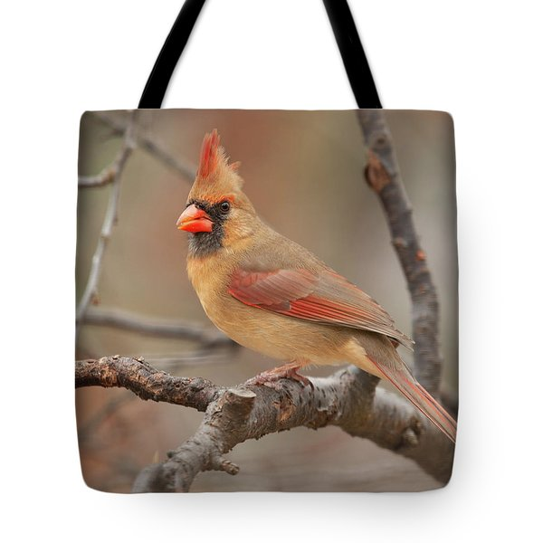 Lady Cardinal Tote Bag