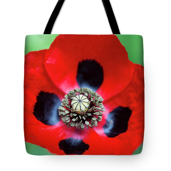 Tote Bag featuring the photograph Ladybird Poppy Flower by Tim Gainey