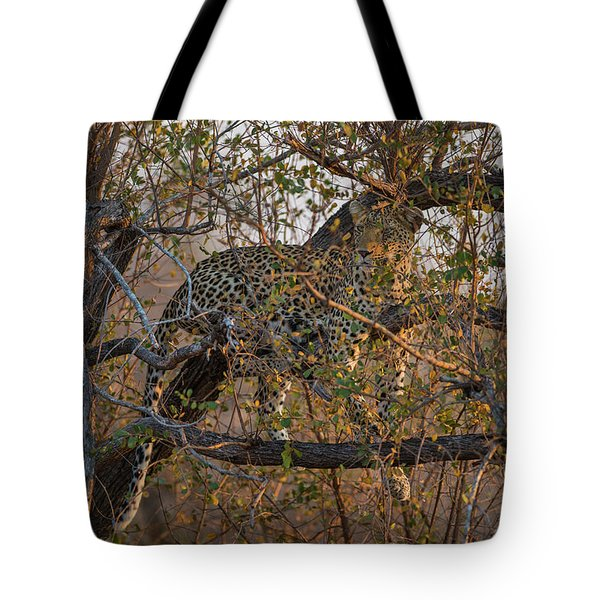 Tote Bag featuring the photograph LC6 by Joshua Able's Wildlife