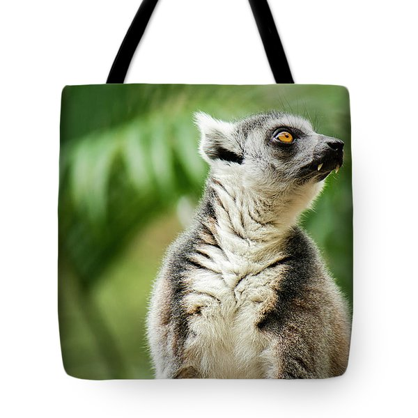 Tote Bag featuring the photograph Lemur By Itself Amongst Nature. by Rob D Imagery