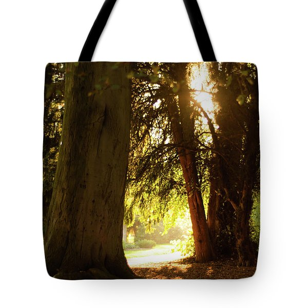 Tote Bag featuring the photograph Light Between Trees by Scott Lyons