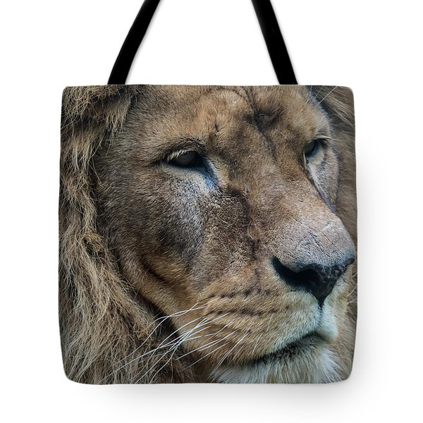 Tote Bag featuring the photograph Lion by Anjo Ten Kate