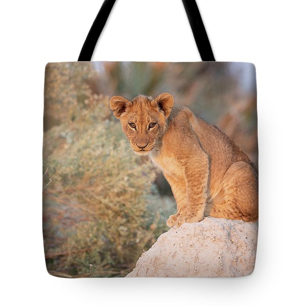 Tote Bag featuring the photograph Lion Cub On Termite Hill by John Rodrigues