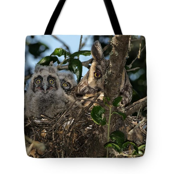 Long-eared Owl And Owlets Tote Bag