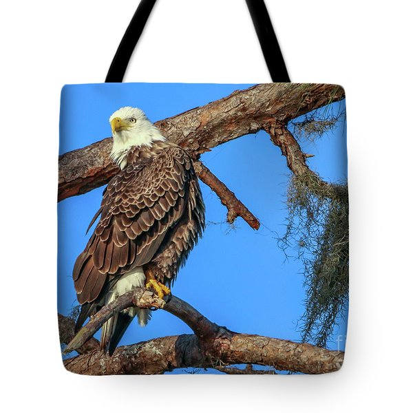 Tote Bag featuring the photograph Lookout Eagle by Tom Claud