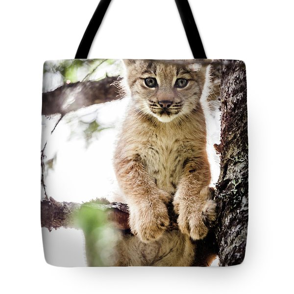 Lynx Kitten In Tree Tote Bag