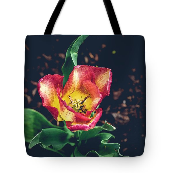 Magnificence Squared Tote Bag