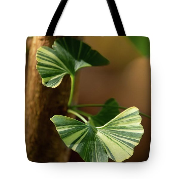 Tote Bag featuring the photograph Maidenhair Tree by Dale Kincaid