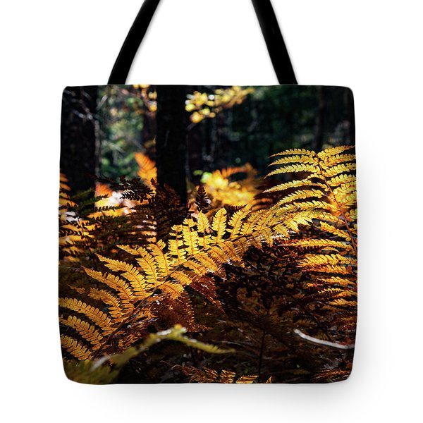 Tote Bag featuring the photograph Maine Autumn Ferns by Jeff Folger