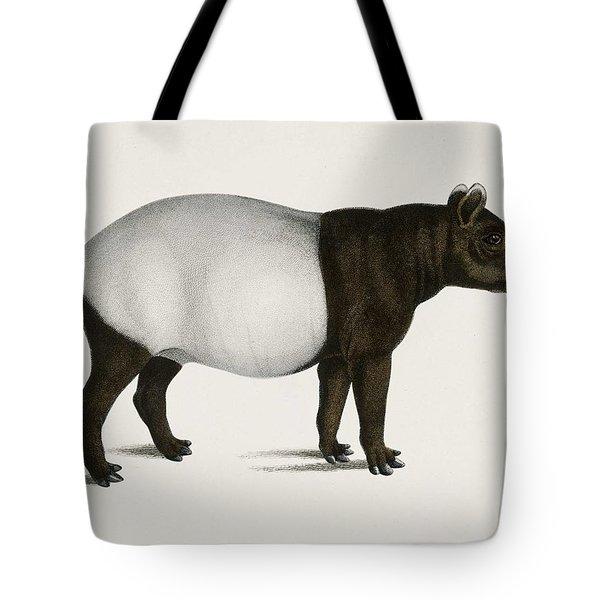 Malayan Tapir  Equus Montanus  Illustrated By Charles Dessalines D' Orbigny  1806-1876  Tote Bag