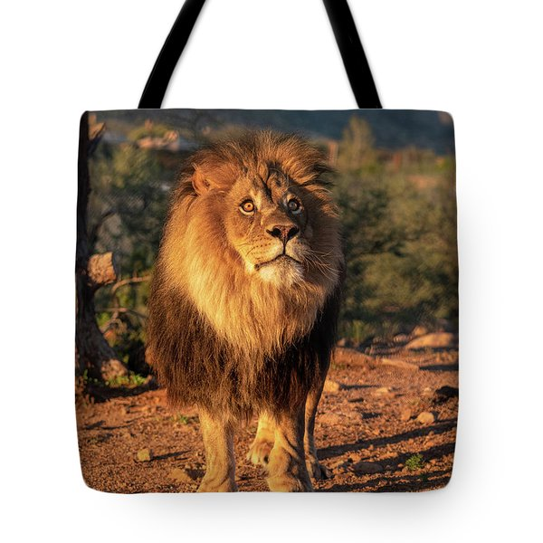 Male African Lion In Early Light Tote Bag
