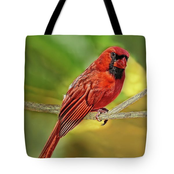 Male Cardinal Headshot  Tote Bag