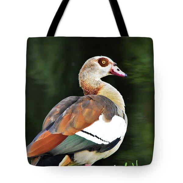 Male Egyptian Goose Tote Bag