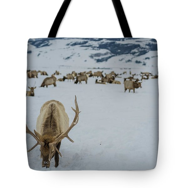Male Elk National Elk Refuge  Tote Bag