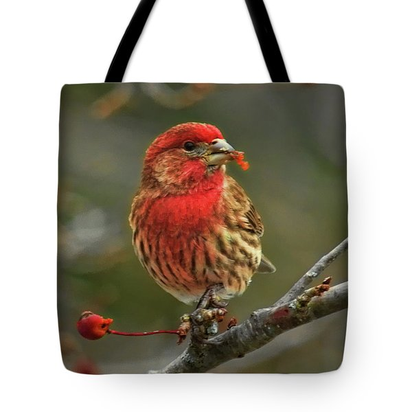 Male House Finch With Crabapple Tote Bag