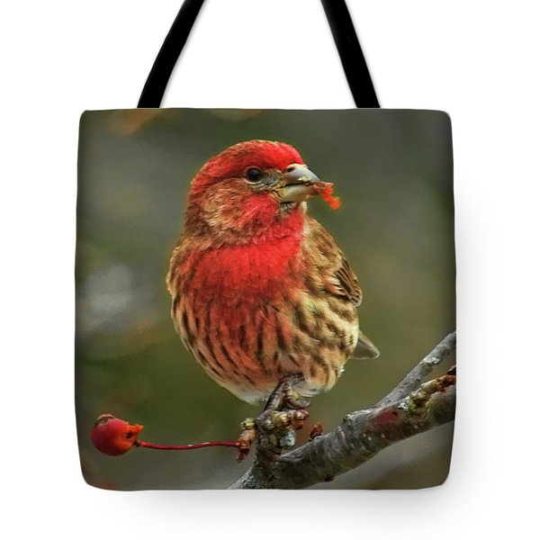 Tote Bag featuring the photograph Male House Finch With Crabapple by Dale Kauzlaric