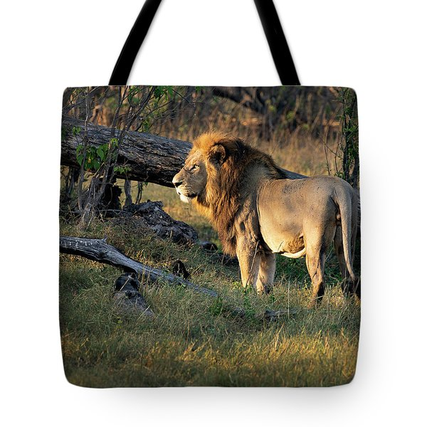 Male Lion In Botswana Tote Bag