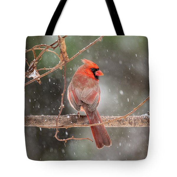 Male Red Cardinal Snowstorm Tote Bag