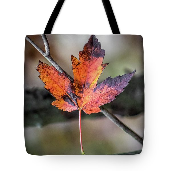 Maple 1 Tote Bag