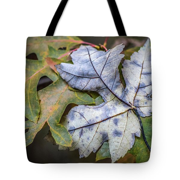 Tote Bag featuring the photograph Maple And Oak by Michael Arend