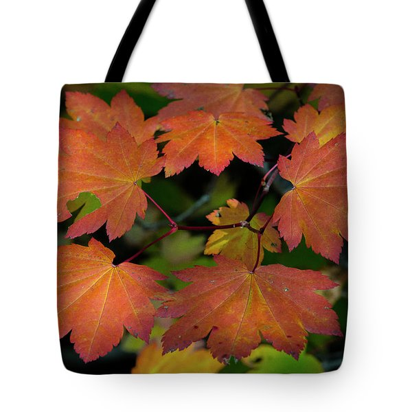 Tote Bag featuring the photograph Maple Circle by Matthew Irvin