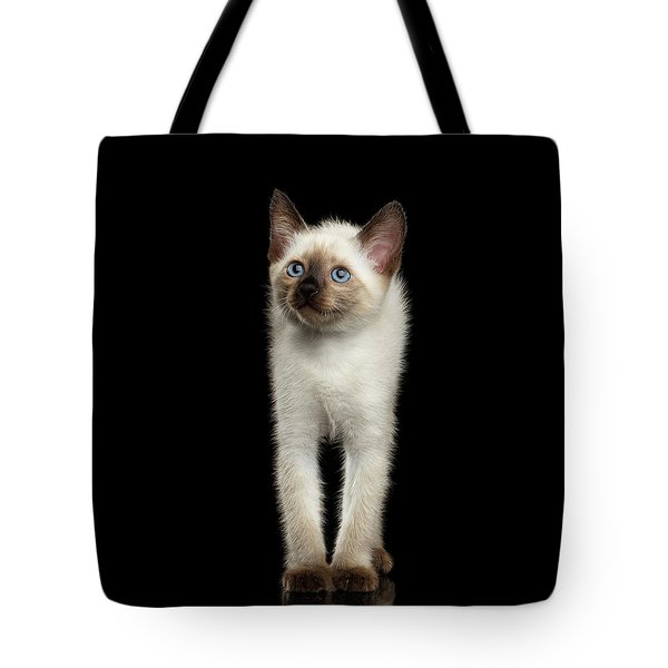 Mekong Bobtail Kitty With Blue Eyes On Isolated Black Background Tote Bag